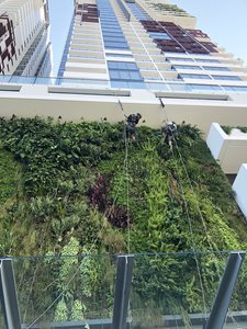 Fytogreen Horticultural Maintenance-Ivy-Apartments-QLD