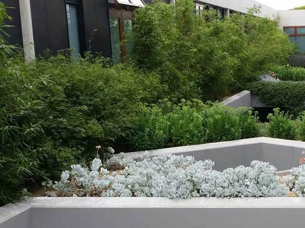 Green roofs are connecting people living in urban environments with nature and the great outdoors