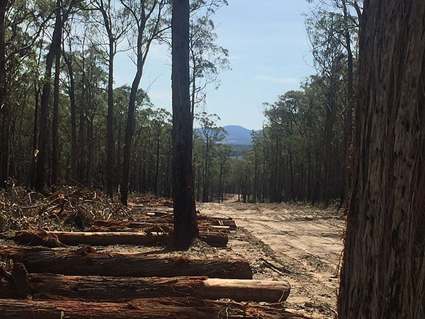 The destruction of Cabbage Tree Creek