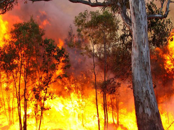 Bushfire Conference To Thrash Out Future Bushfire Planning