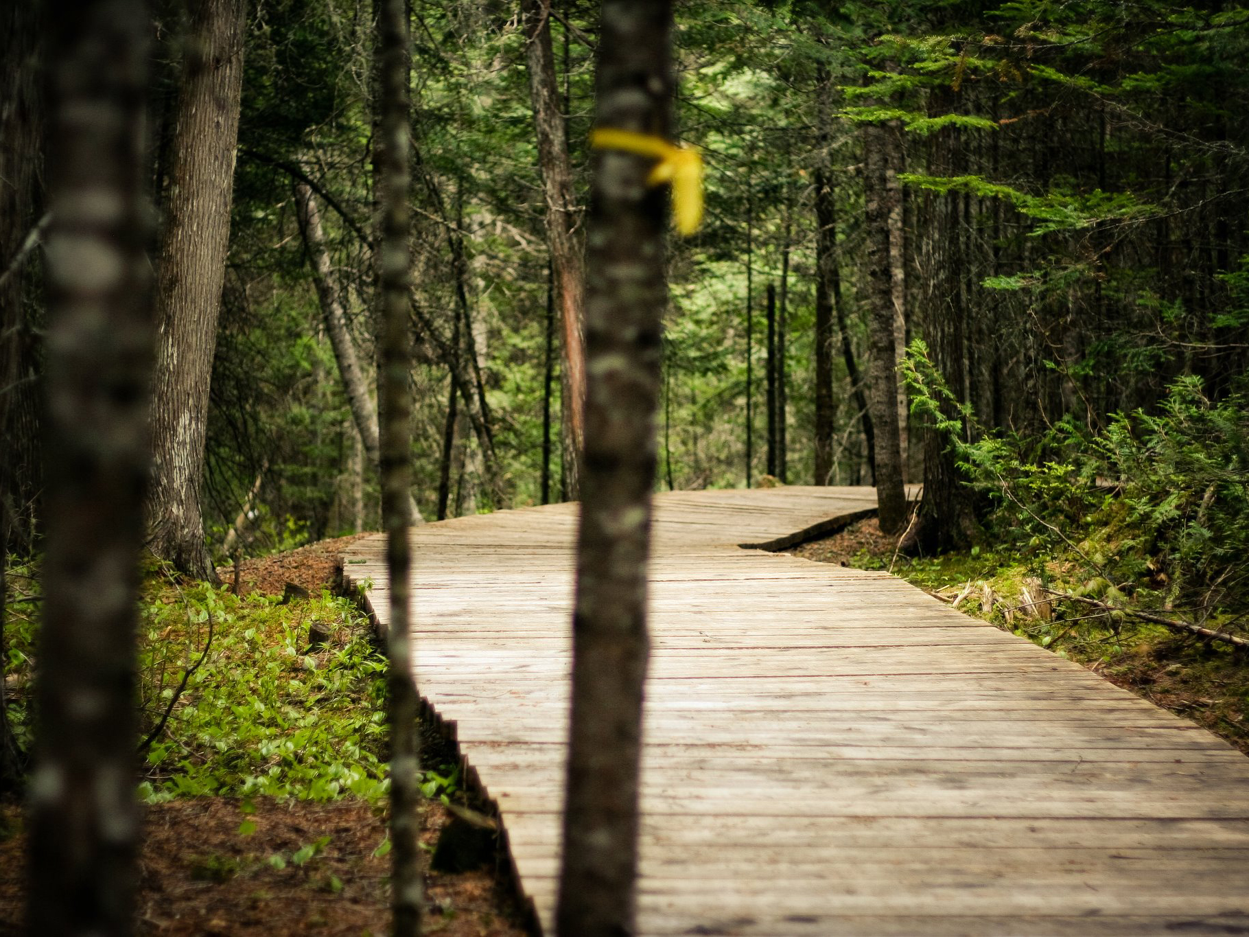 Mountain biking seems harmless but can damage soil and scare wildlife. Image: vonm.ca