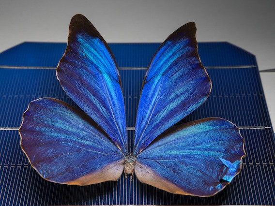 Researchers at ANU have designed smart solar windows inspired by the wings of butterflies. Image: Australian National University