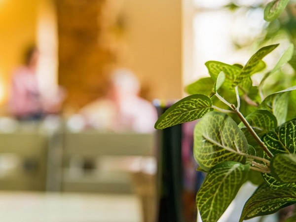Greenery always works in restaurant decor