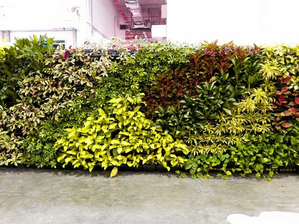 Elmich green wall at Green Living 2016