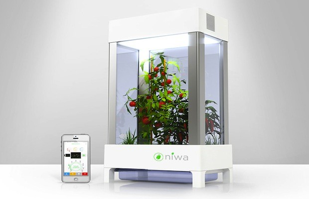 Grow Your Own Indoor Garden With The Niwa Hydroponic