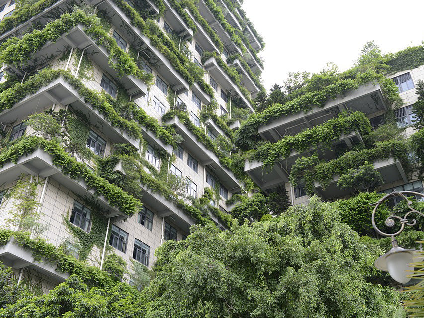 Green rooftops give a backyard feel to smaller housing units in Sydney. Image: Author provided