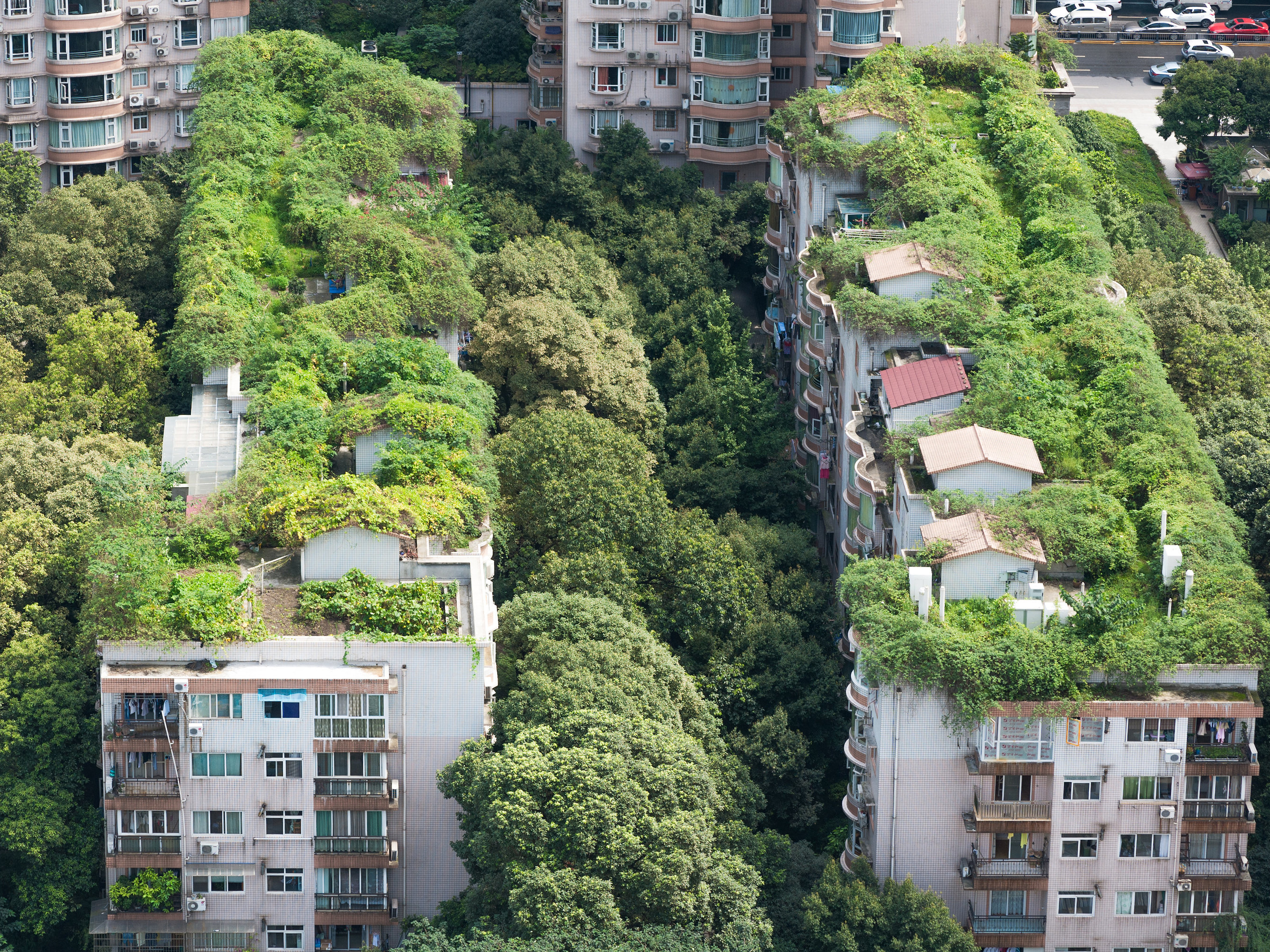Garden roofs (like these in Chengdu, in China's Sichuan province) need maintenance and community involvement. Image: shutterstock.com