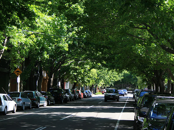 How trees can mitigate heat in urban ecosystems