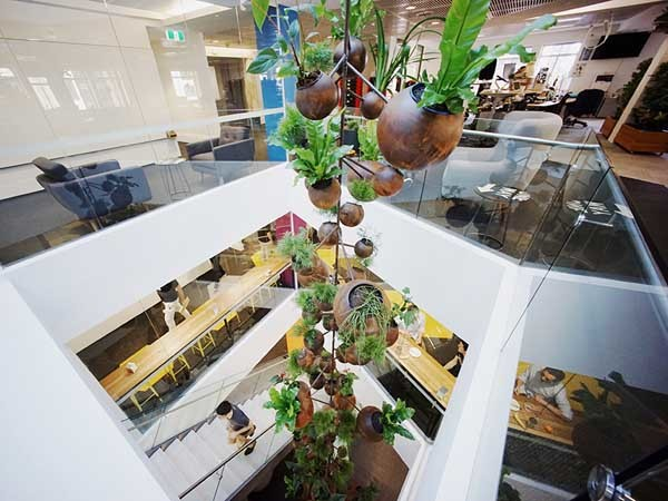 Tensile Suspends Pots With Plants From A High Ceiling In Sydney