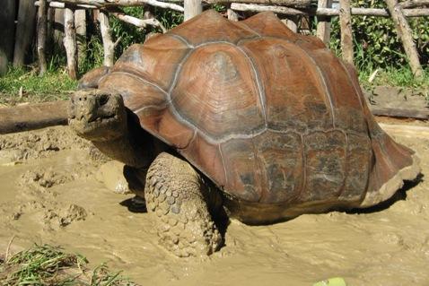 Boral Brick Clay Keeps World S Largest Tortoises Warm