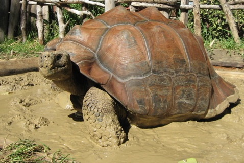 Boral Brick Clay Keeps World S Largest Tortoises Warm Architecture And Design